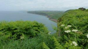 coast-towards-whitehaven_cath-t-788