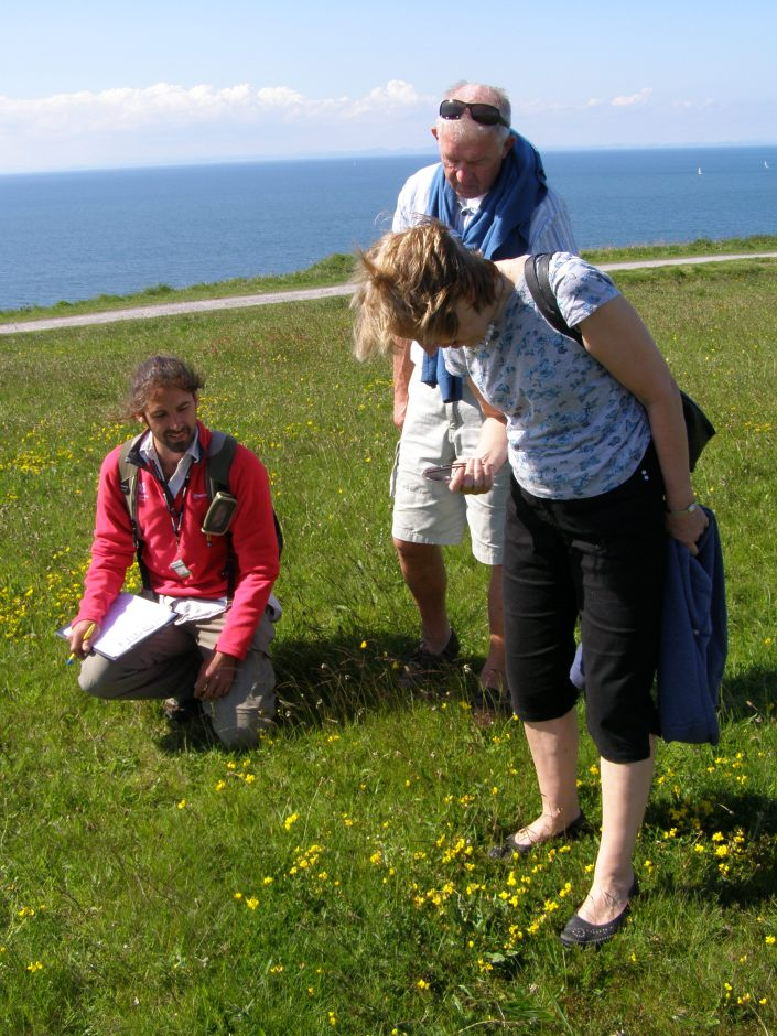 Visitors looks for wildflowers
